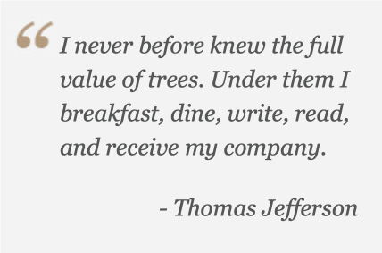 The Value of Trees Quote