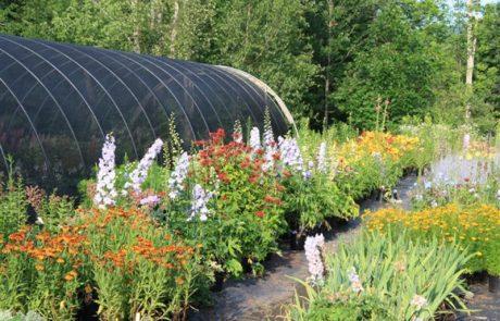 View of Sun-Loving Perennials