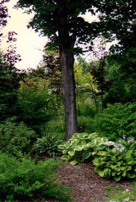 Woodland planting